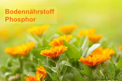 bodennaehrstoff-phosphor